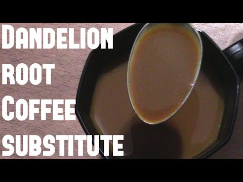 Dandelion Root: Coffee Substitute Review – That's Not Coffee!
