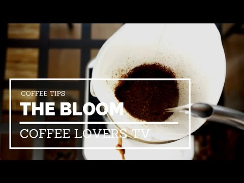 The Bloom – Understand This When Brewing Coffee (Pour Over / Drip)
